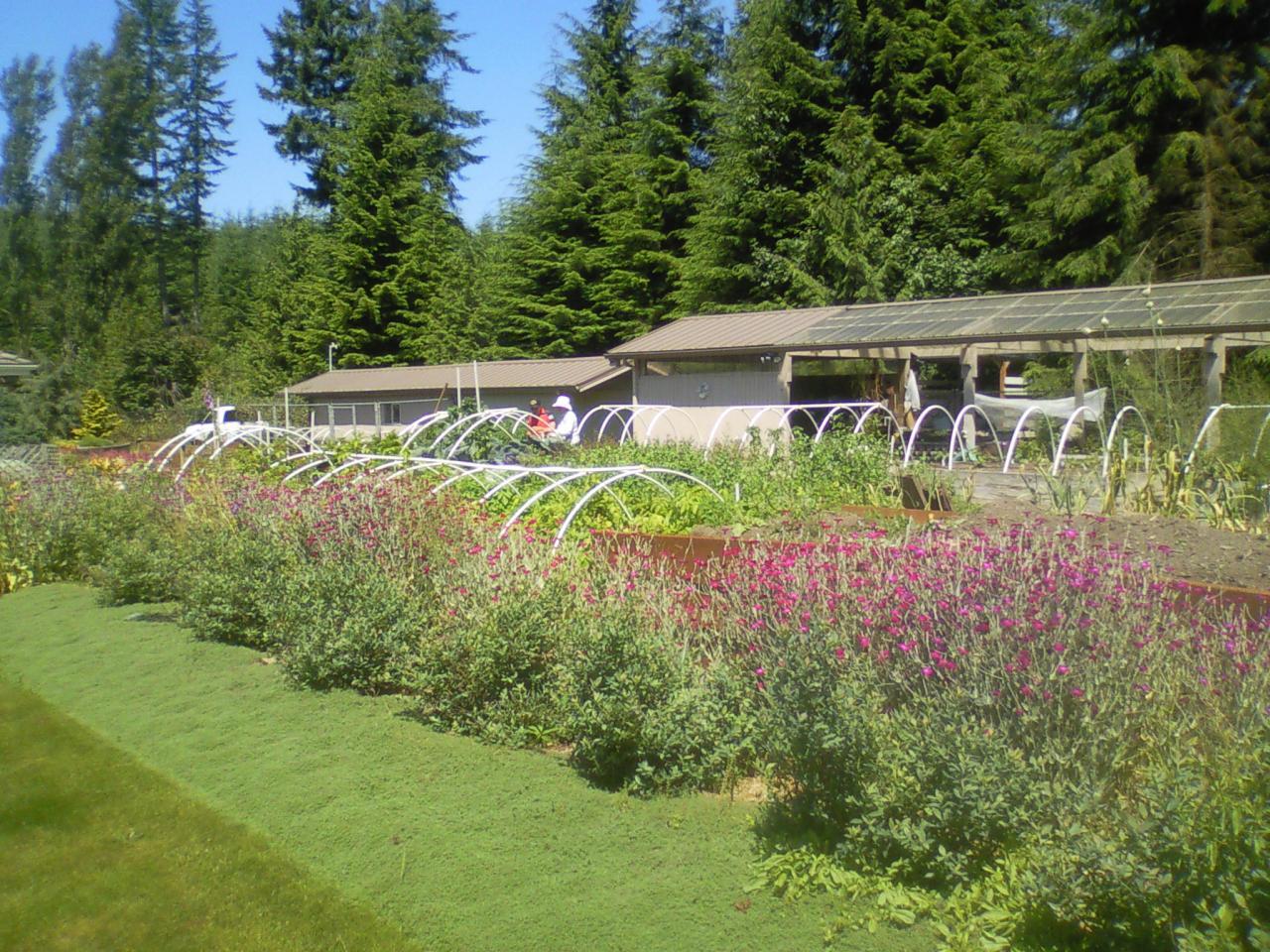 Jim and Pam's organic garden