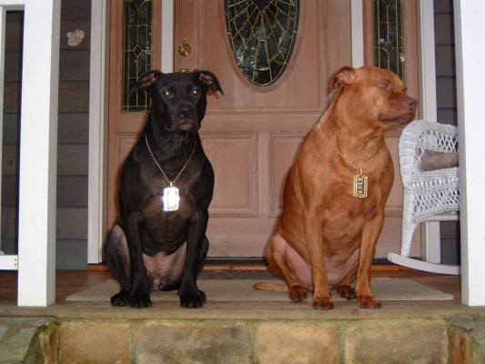 My Pitbulls, Lola and Lucy sitting on the front porch.